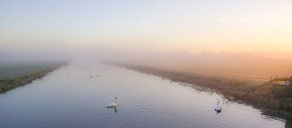 Zwanen in de mist