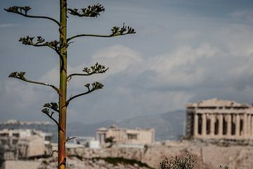Athènes sur Eric van Nieuwland