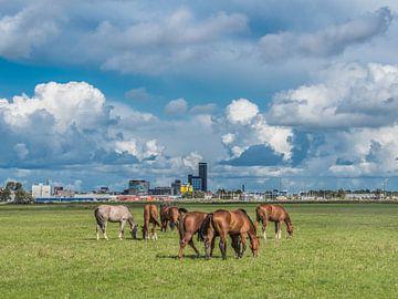 Zicht op de skyline van Leeuwarden met paarden op de voorgrond von Harrie Muis