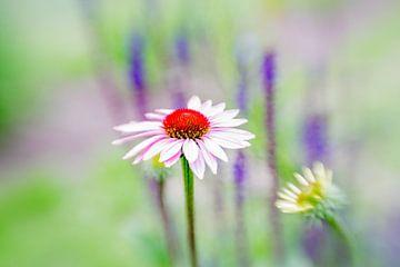 Blume gegen einen pastellfarbenen Hintergrund von Leo Luijten
