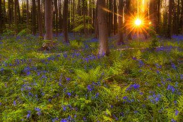 forêt enchantée sur Daniela Beyer