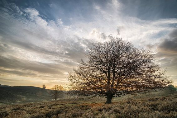 Posbank tree