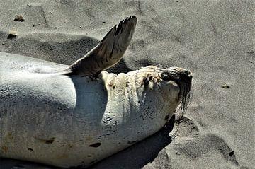 Zwaaiend zeeolifantje van Lisanne Rodenburg