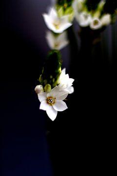 Winterblumen von Marianna Pobedimova