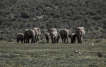 Elefanten in Südafrika von Discover Dutch Nature