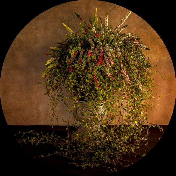 waterval van bloemen in een hoge pot van Compuinfoto .