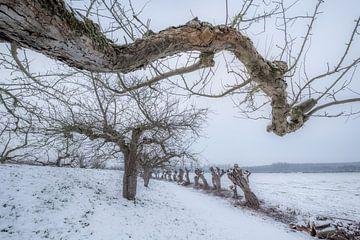 Appelbomen in de winter von Moetwil en van Dijk - Fotografie