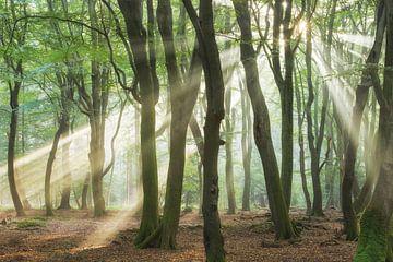 Amazing Rays van Lars van de Goor