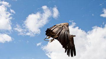 Gier in de lucht sur Guido Akster