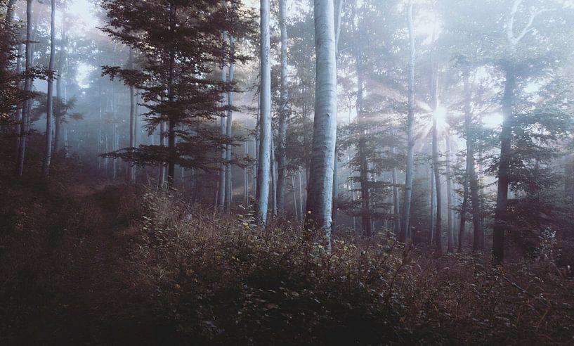 Landschap van Laurance Didden