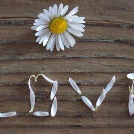 Durch die Blume gesagt van zwergl 0611