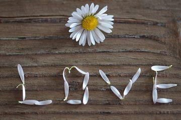 Durch die Blume gesagt von zwergl 0611