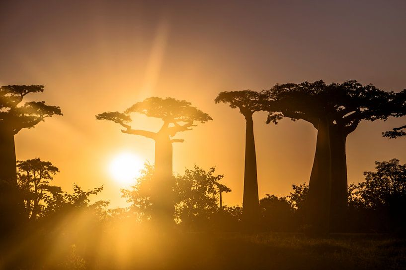 Zonsondergang in Allée des Baobabs van Cas van den Bomen