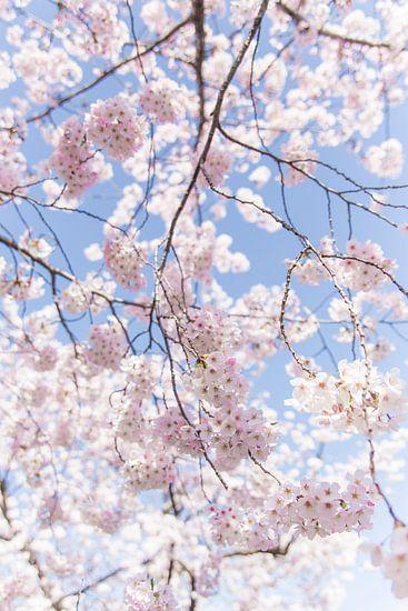 Sakura, Japanse Bloesem van Studio W&W