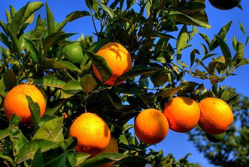 Orange in the sun