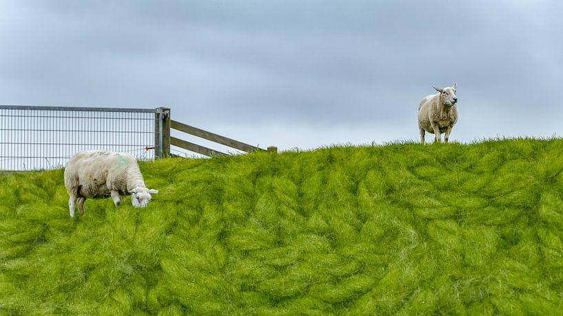 Schafe auf dem Deich | Terschelling von Marianne Twijnstra-Gerrits