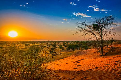 Zonsopkomst in de Kalahari woestijn, Namibië