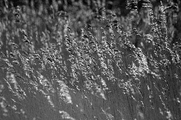 Wellende Schilffedern in Schwarz-Weiß von Laura Weijzig
