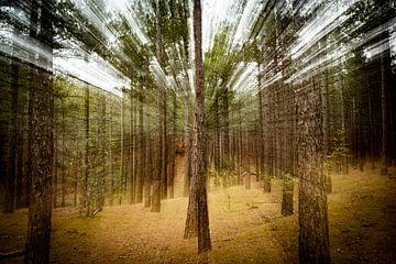 Betoverend bos van Marielle Jurvillier