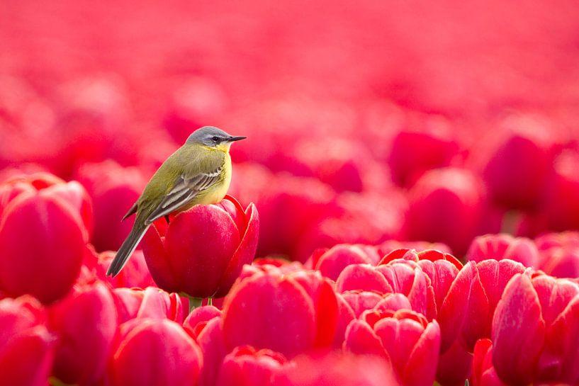 Liefde voor kleur  van Ina Hendriks-Schaafsma