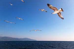 Zeemeeuwen in een blauwe lucht, boven e Egeische Zee in Griekenland.