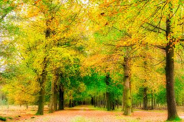 la forêt pleine de couleurs automnales sur eric van der eijk