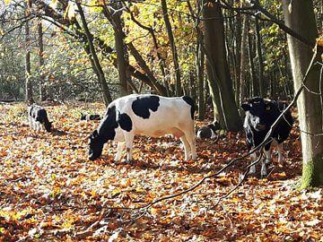 Koeien in het bos van 10a Boes