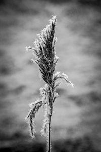 Bevroren wereld in zwart wit van
