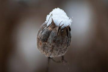 Een hoedje van sneeuw van