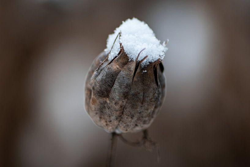 Een hoedje van sneeuw van Ingrid Aanen