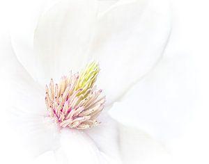 Magnolia van Greetje van Son