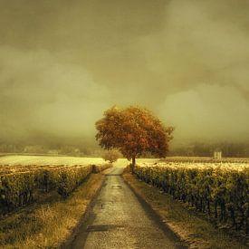 Through the Vineyard sur Lars van de Goor