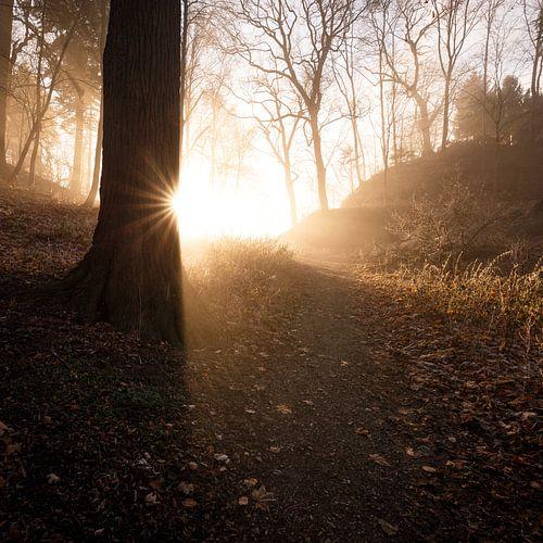 Magisches Licht 005 van Oliver Henze