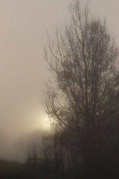 Sonnenaufgang im Nebel. von Jessica Bakhuijs