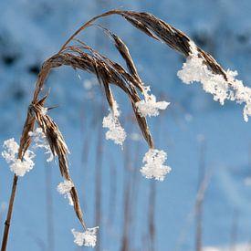 winter, gras van Arnoud Kunst