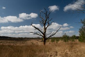 dode boom in een veen gebied in Drenthe