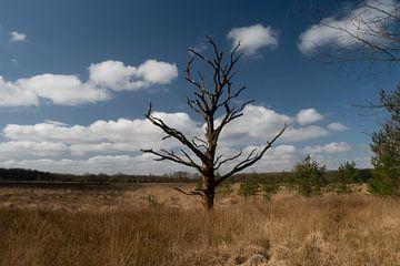 dode boom in een veen gebied in Drenthe van Eline Oostingh
