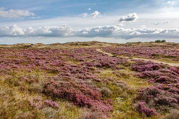Heide in natuurgebied de Bollekamer Texel van Ronald Timmer