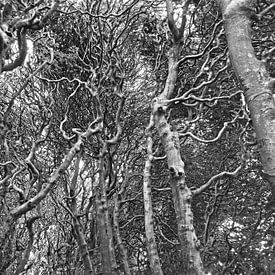 In The Fairy Tale Forest van Gerrit Zomerman