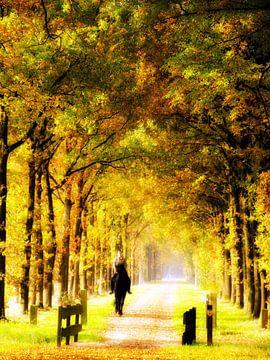 Paardrijden in het bos van Jessica Berendsen