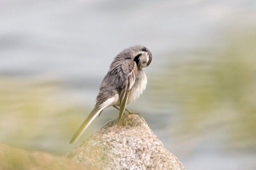 Waschen Vogel am Wasser | Vogelfotografie drucken Schweden von Dylan gaat naar buiten