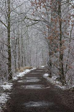 a winter path sur Koen Ceusters
