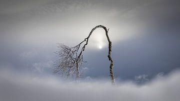 Het winter boompje