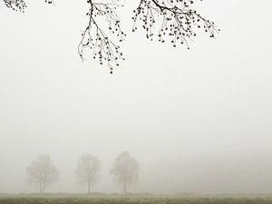 Drie bomen in de mist in het Twentse landschap