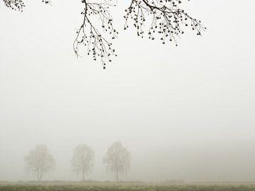 Drie bomen in de mist in het Twentse landschap van Art Wittingen