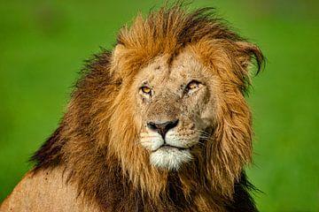 Leeuw van Peter Michel