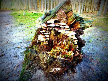 Paddestoelen op boomstronk van Angelique Roelofs