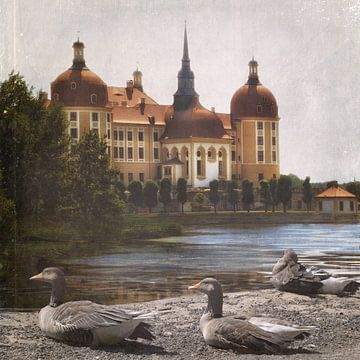 De ganzen van Moritzburg van Christine Nöhmeier
