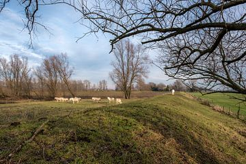 witte paarden bij dijk van Moetwil en van Dijk - Fotografie
