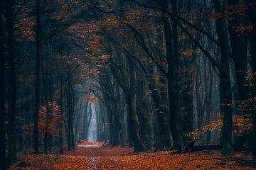 Colors of autumn van